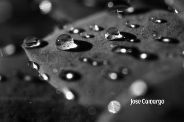 nature naturelovers photography blackandwhite waterdrops