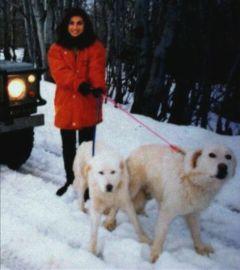 cute mylove mydogs dog winter