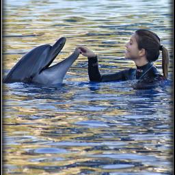 photography animals dolphins show dolphinarium