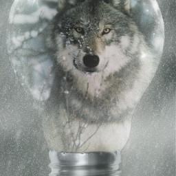 snow winter snowmasks wolf nature