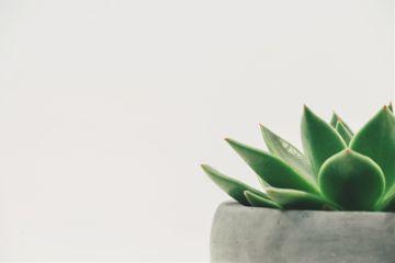 freetoedit art tiny leaves green