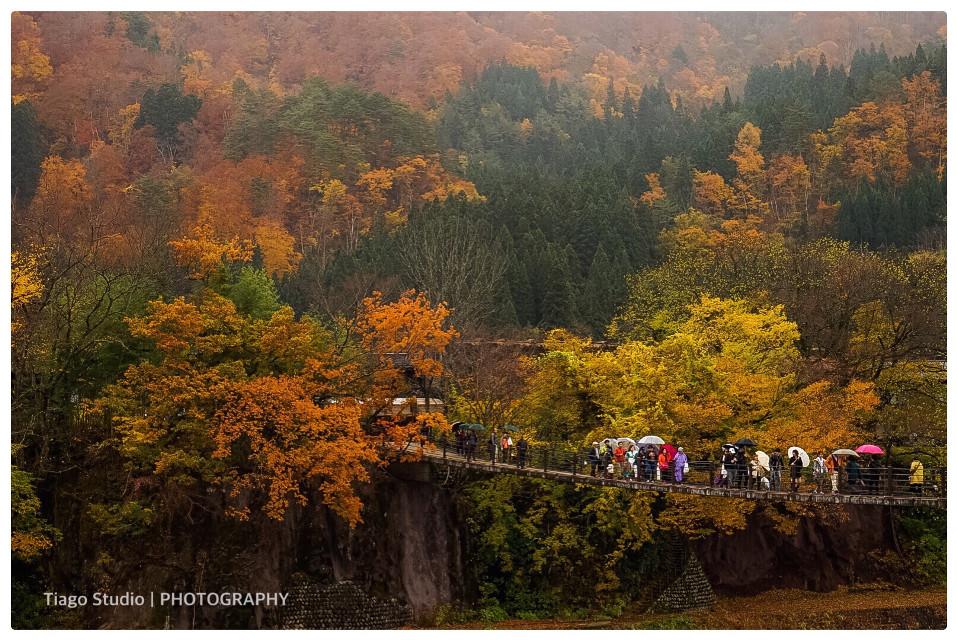 #interesting #art #nature #travel #japan #bridge #people #trees #street #photography #macau #tiago studio
