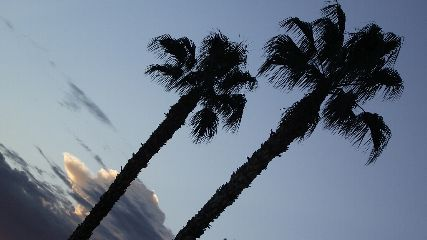 palmtrees palms vegas