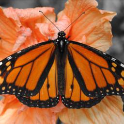 flower butterfly orange nature