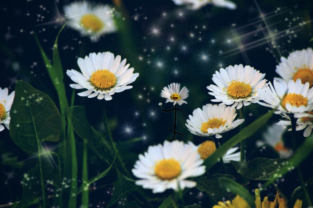 A little daisy pic nature flowers daisy sticker lightm a little daisy pic nature flowers daisy sticker lightm izmirmasajfo