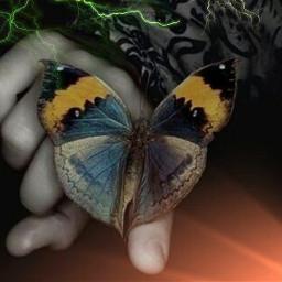 butterflies mariposa freetoedit