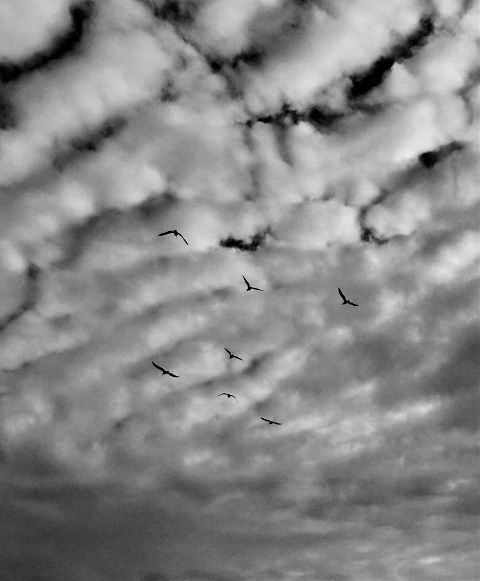 photography blackandwhite sky clouds birds freetoedit