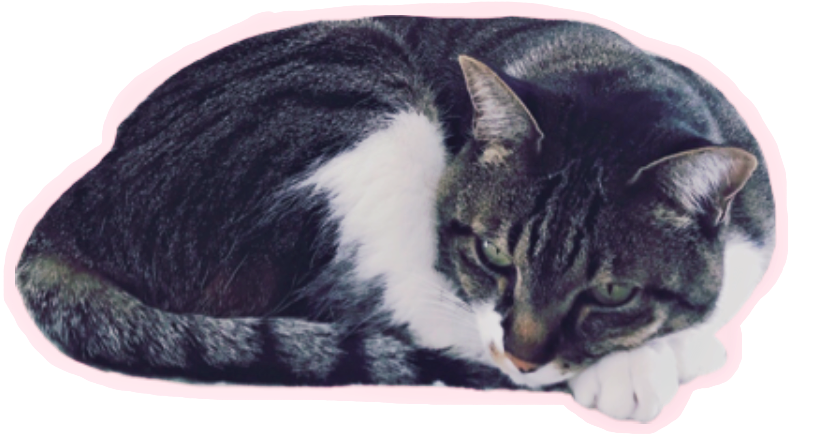 #FreeToEdit #ftestickers #cat #cats #cute #fluffy #animals #whiskers #paws
