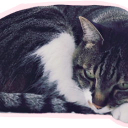 FreeToEdit ftestickers cat cats cute fluffy animals whiskers paws