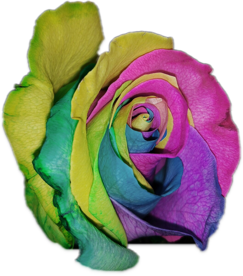 #FreeToEdit  #ftestickers #flower #colorful