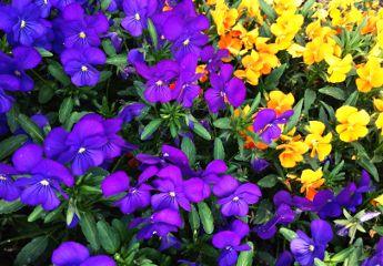nature spring freetoedit