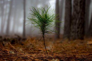 naturephotography freetoedit