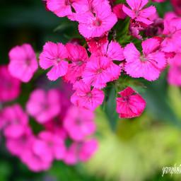 spring flowers springday photographs naturephotography