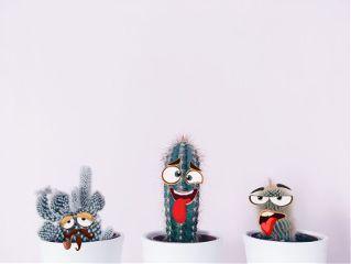 cactusremix freetoedit cactus cute