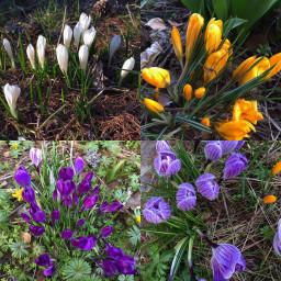 nature spring petaloso flowers