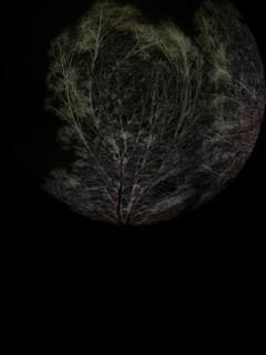 tree surreal freetoedit