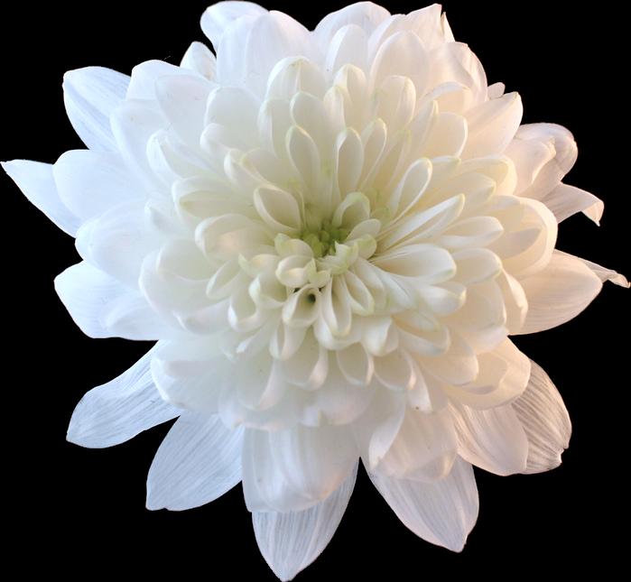 Flower white whiteflower tumblr aesthetic flower white whiteflower tumblr aesthetic mightylinksfo